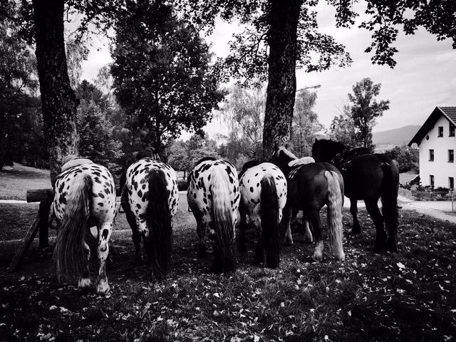 traildichein Tigerhill Ranch